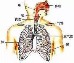 人口呼吸是吸还是呼_人口普查