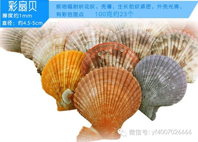【天然发布】亚峰新品装饰品造景海螺海星猴子扇贝仔鱼缸暴击多少好图片