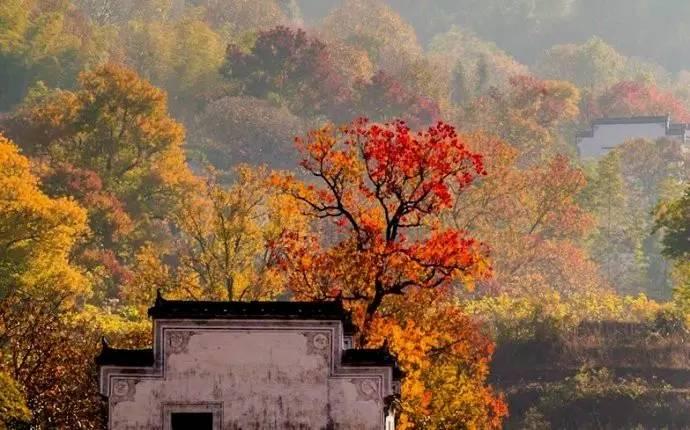 安徽的秋天,是一幅画-一生痴绝处 全国人民将羡慕死安徽了,光看图