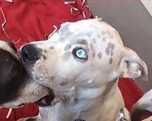 两只小狗深入交流后,表情亮瞎了.图片