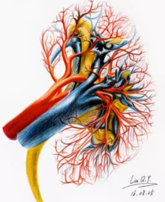 一看到这些手绘的解剖图,我就跪了!