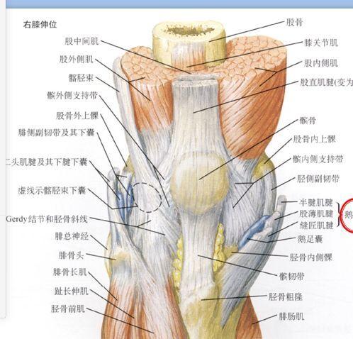 蹲下疼痛,竟是膝关节炎,只有老人才有吗