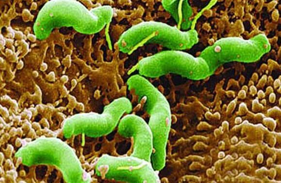 抗生素真的能彻底杀死幽门螺杆菌吗?
