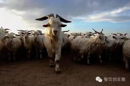 餐饮老板如何做好团队领头羊?