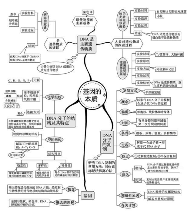 高中生物思维导图