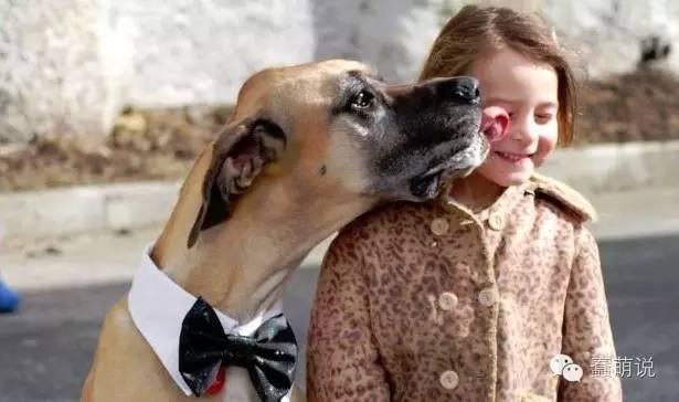 虽然这样很亲昵,但你能接受狗狗舔你,甚至舌吻你吗?-蠢萌说