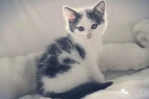 对猫咪过敏就真的不能养猫了吗?那可不一定-蠢萌说