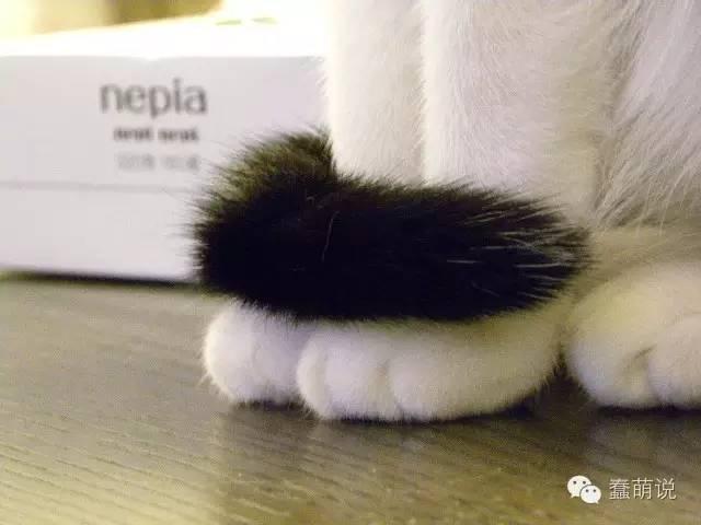 从猫咪坐姿看个性?尾巴收不收有玄机!-蠢萌说