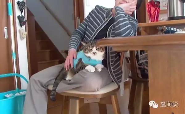 猫主子霸占猫奴大腿时,要怎么脱身才好?-蠢萌说