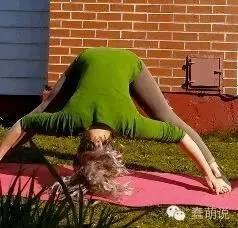 你敢在喵星人面前做瑜伽吗?-蠢萌说