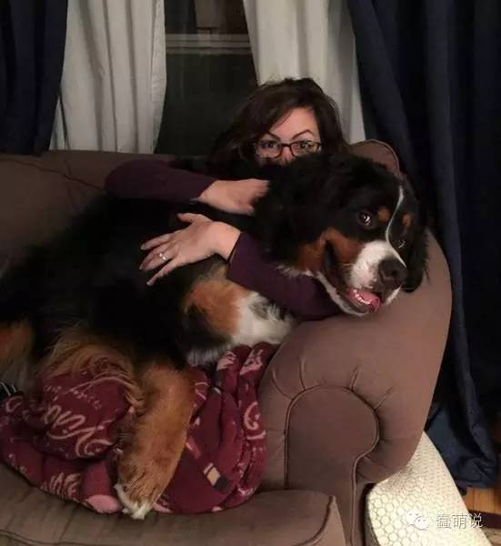 为什么喜欢狗狗,可能有时候我们真的没把他当做狗吧-蠢萌说