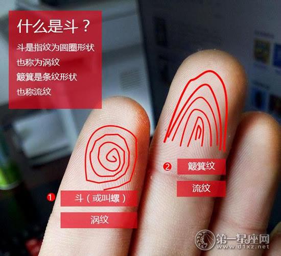 手相上有这几个斗的是富贵命:手指斗的说法介绍