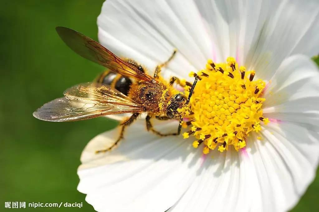 团购 440只小蜜蜂专为你做的蜂巢蜜,绝对不会人为掺假的蜜图片