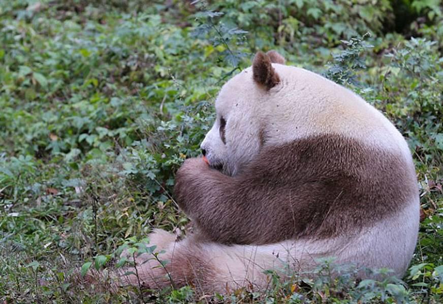 一线爱豆滚滚穿越电站落水.ifs熊猫翻墙的案子破了!