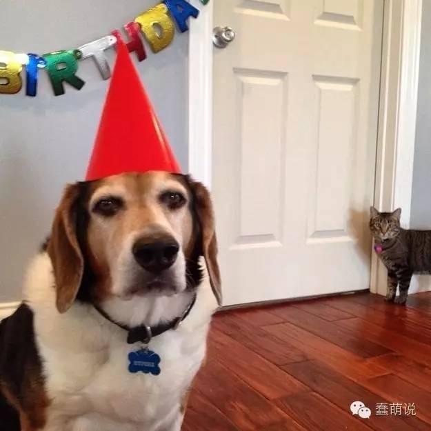 """这10种狗狗的反应会让你觉得""""这不就是我吗?""""-蠢萌说"""