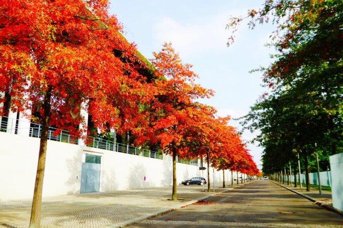 柏林漫长的冬天也就来了.拍下一组柏林秋色的美图,与大家分享.图片