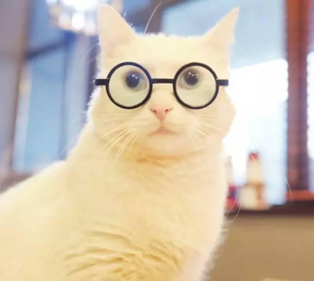 文艺手绘猫咪图片