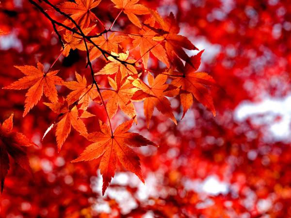 美爆了 你见过南宁的这些秋天吗