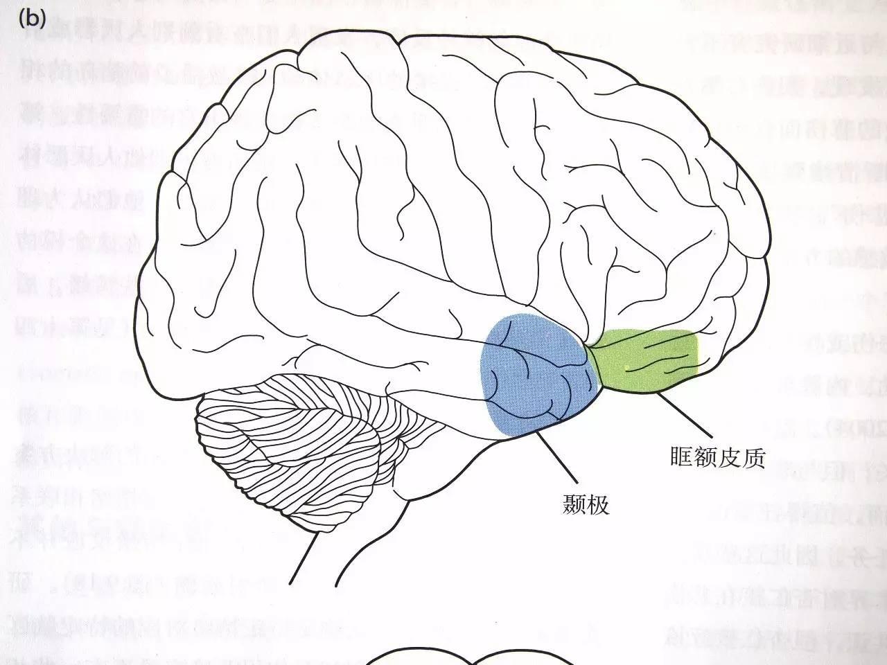 婴儿科学手绘图