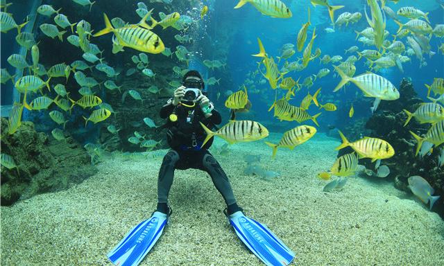 天房洲际酒店海洋馆的参观形式是怎样的?