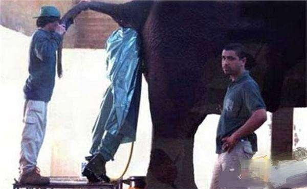 些职业原来这么恶心.   臀部清洁工,在日本许多相扑人员因为肥胖上图片