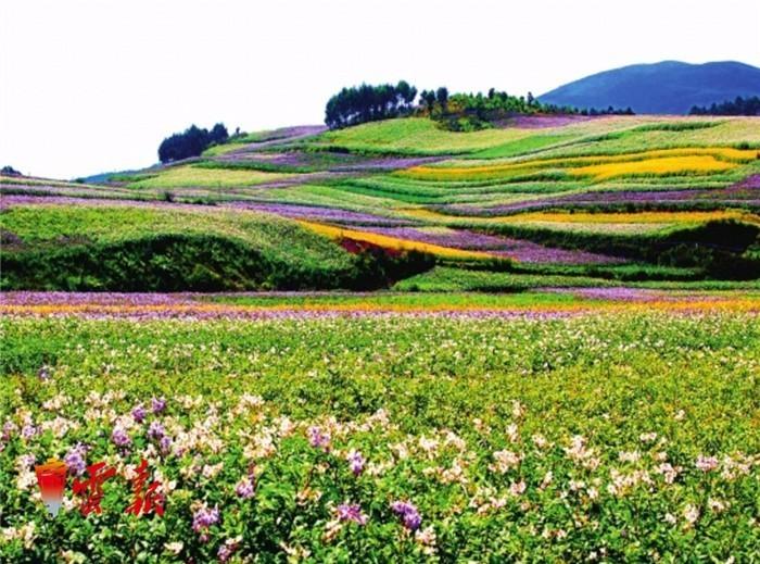 壁纸 成片种植 风景 植物 种植基地 桌面 700_519