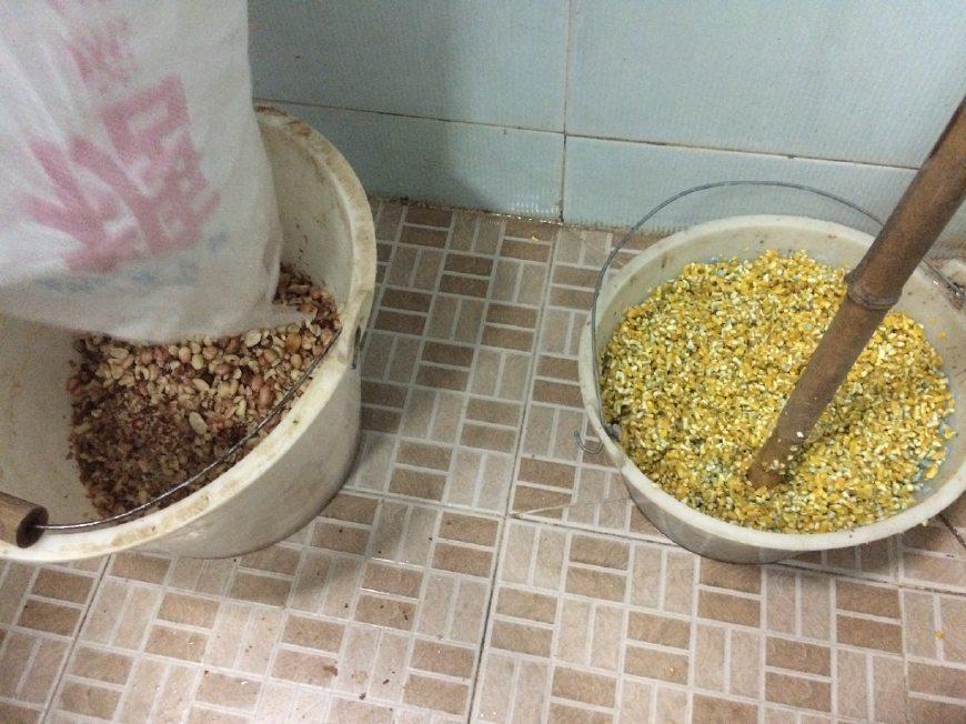 海南老鼠这么大,南繁人种玉米前一定要给点好吃的图片