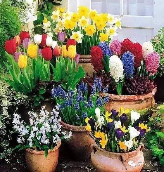 拉罐手工制作花盆