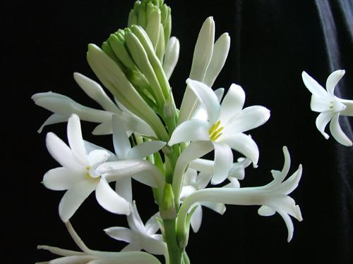 养花小常识 这4类花草养在家里等于不要命