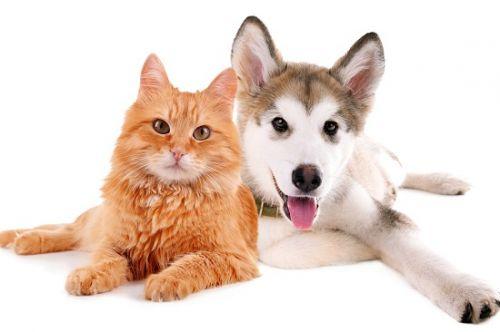 男人如狗,女人如猫