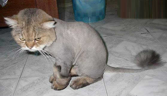 可以给猫咪吃些宠大益生源,缓解环境改变对猫咪的压力.图片