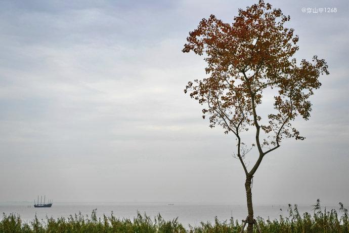 为爱行走,醉在太湖马山半岛的秋色里