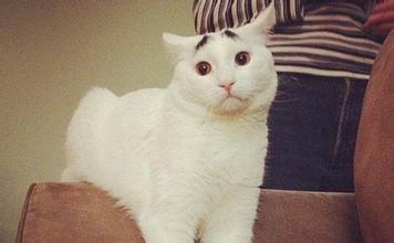 猫得了皮肤病用什么药图片