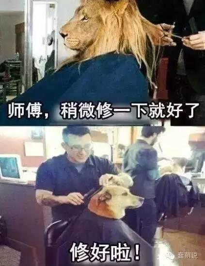 每日一蠢萌:理发前我是雄狮,理发后我成了哈士奇……-蠢萌说