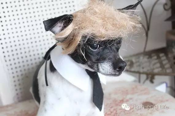 特朗普大全发型图片界丨请问有没有流行过汪星发型的走俏现在最考虑宠物头发男生图片