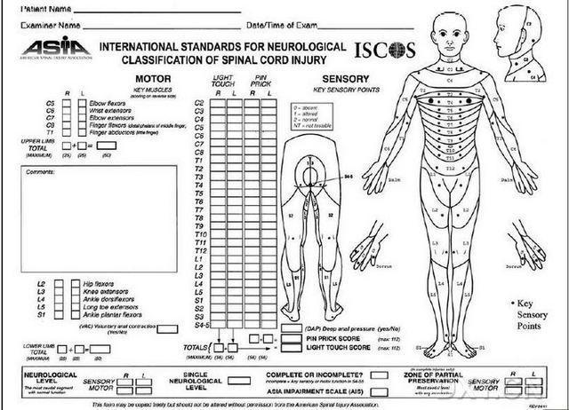 脊柱 脊髓解剖与损伤特点