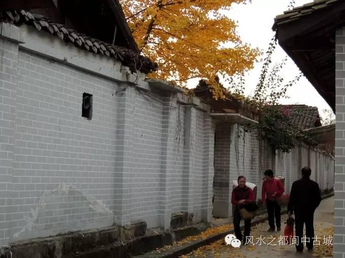 被李世民种下的银杏美到 阆中的银杏,可不止美了1400年