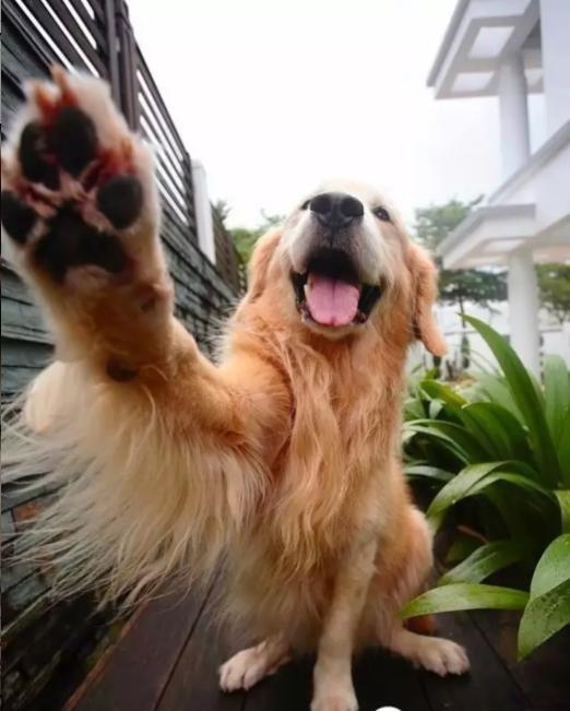人跟什么动物做爱爱最开心_壁纸 动物 狗 狗狗 522_651 竖版 竖屏 手机