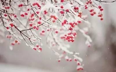 初雪 | 那些写雪的唯美古诗词