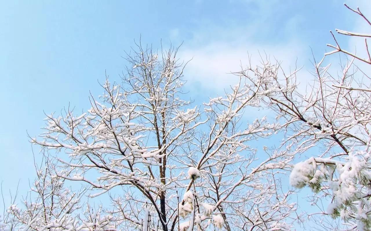 节气丨小雪雪满天,来岁是丰年