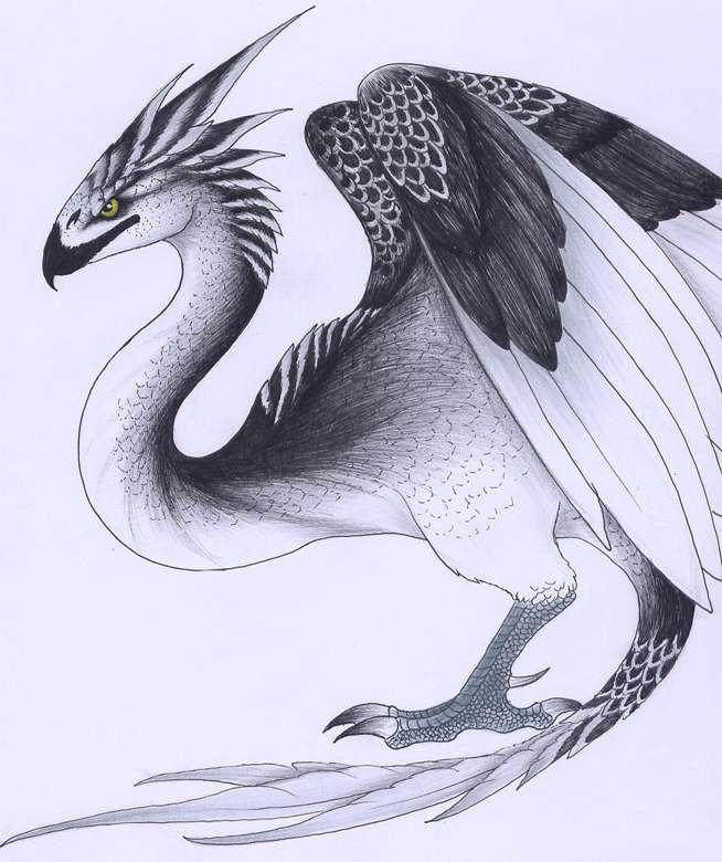 神奇动物魔法世界最全科普手册文/鲲鹏万里电影