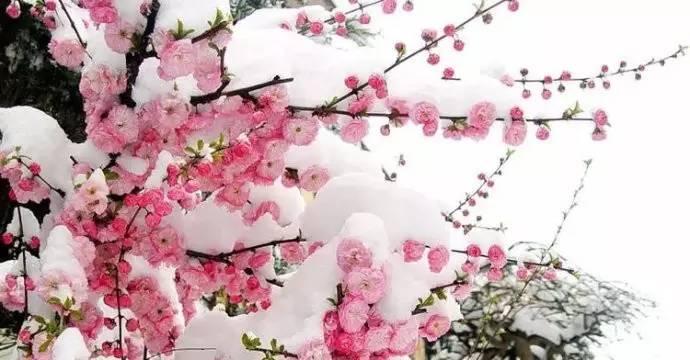 小雪  古诗词里的小雪图片