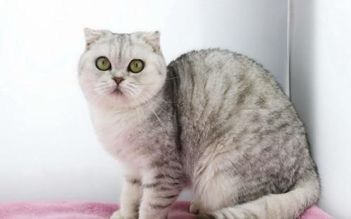 猫咪吃了很多不拉屎怎么办,猫咪消化不良不拉屎
