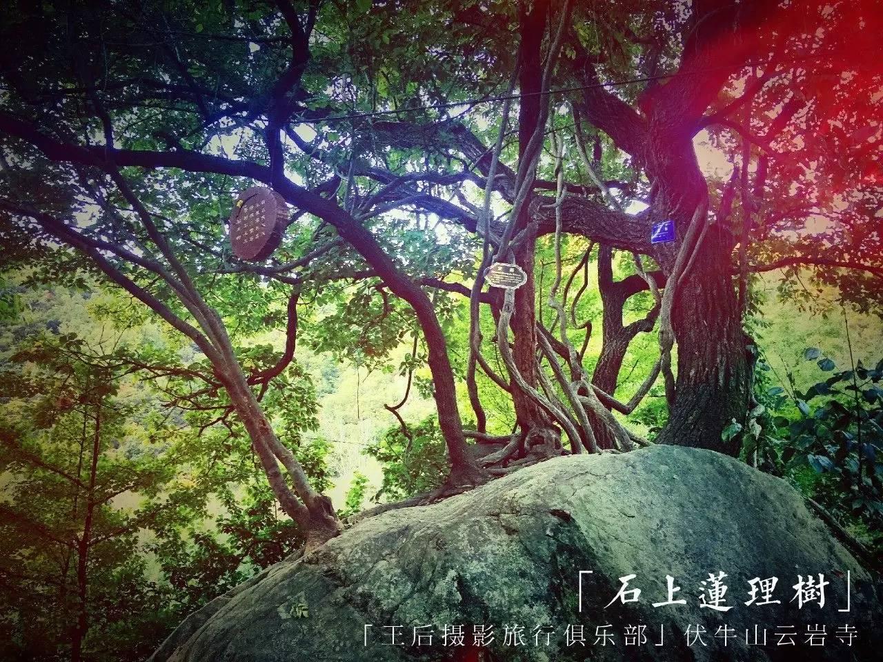 如果我是一棵树 - 日记 - 豆瓣