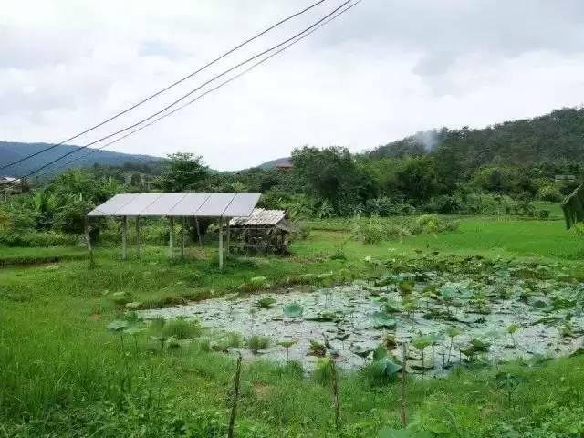 泰国学渣3个月造出私家别墅,又拿一片鱼塘震动欧美,连TED都要请他指导人生 - 浪浪云 - 仰望星空