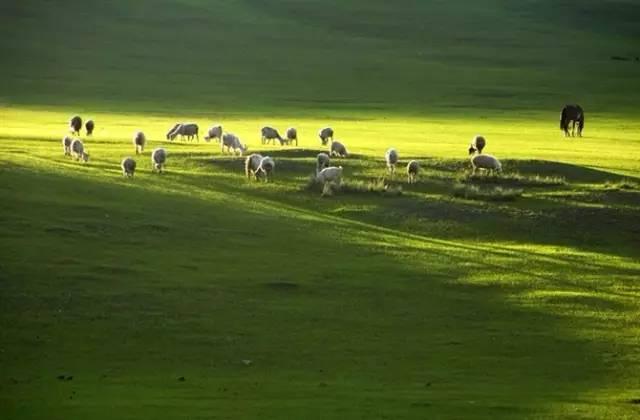 清风牧场_一朵洁白的想象 给我一阵清风 吹开百花香 给我一次邂逅在青青的牧场