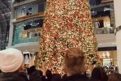 全球最大圣诞树揭幕:用iPhone 7 Plus拍摄
