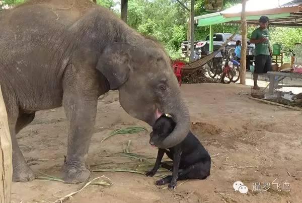 大乌龟和小母牛 小大象和汪星人 泰温暖的跨界友爱