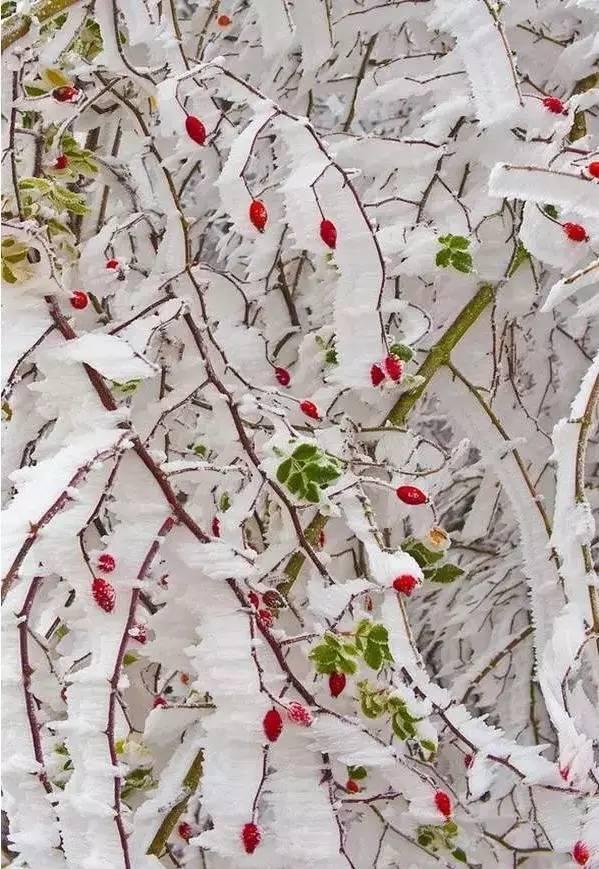2016年11月29日 - 冰融 - 冰融的博客