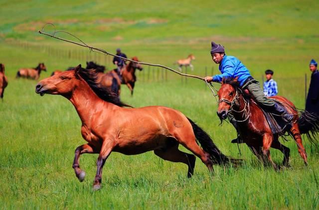 日古冷出身于牧民家庭,从小便生活在鲜碧如画,一望无际的内蒙古草原上